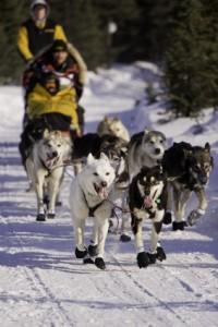 Iditarod Rennen