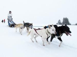 Teamevent im Schnee