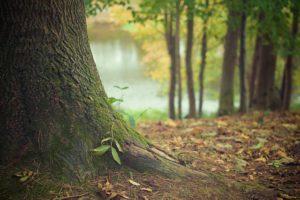 Wald - gut für Körper und Geist