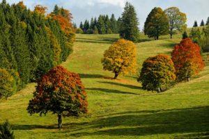 Teamevents im Herbst in der Natur